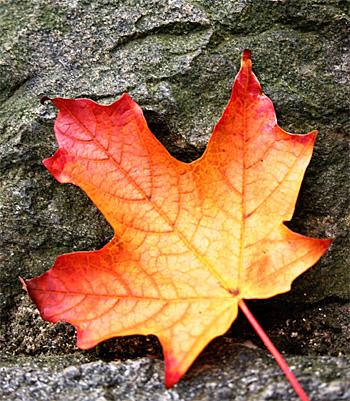 single_leaf